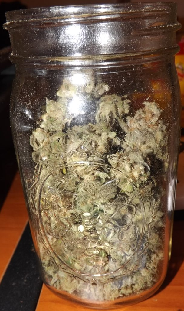Homegrown cannabis curing