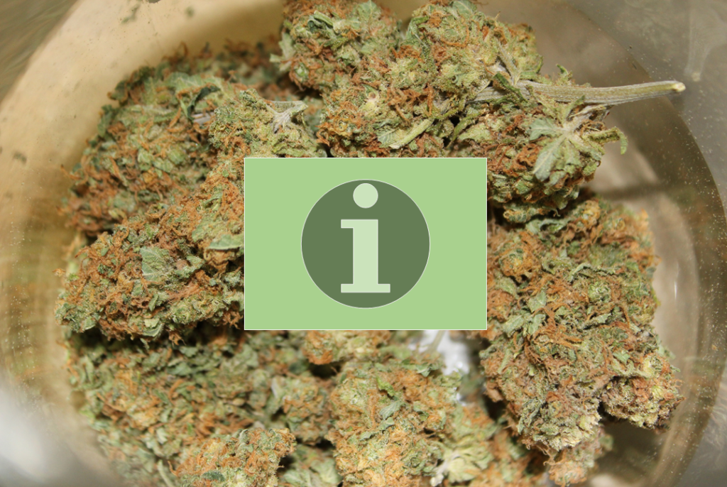 feature-image-for-crappy-cannabis-curing