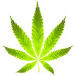licensed-cannabis-leaf-for-marijuana-games-image-150x150